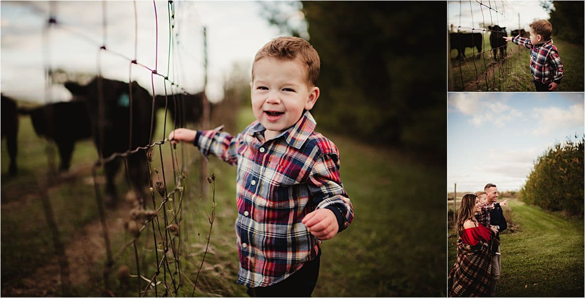 Fall Family Maternity Session Little Boy Looking at Cows