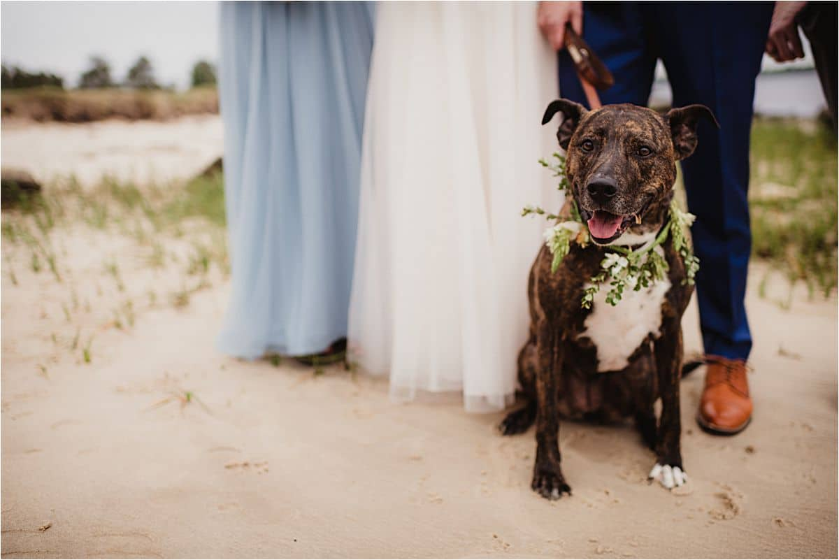 Close Up Wedding Party with Dog