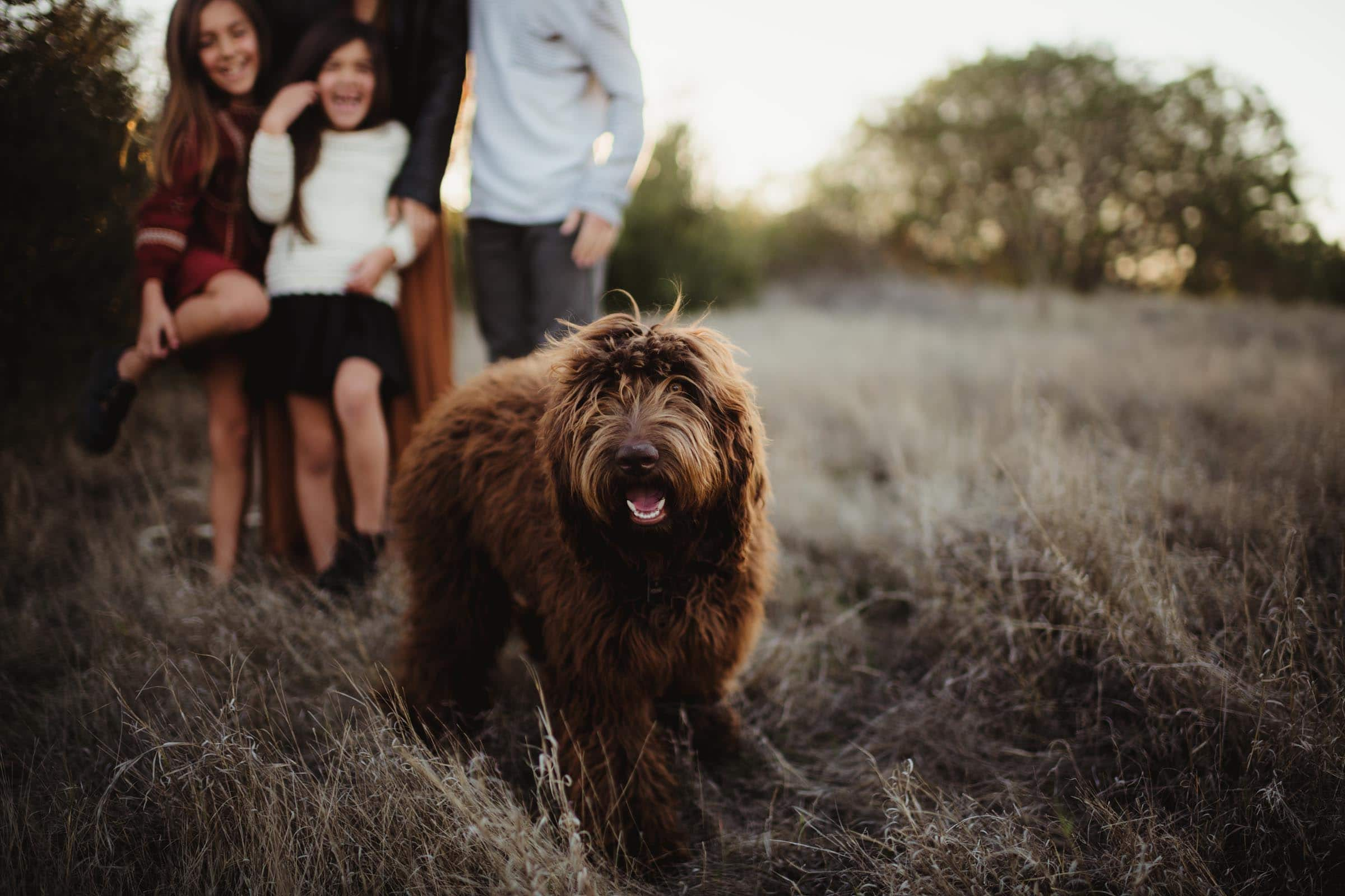 Close Up Family Dog