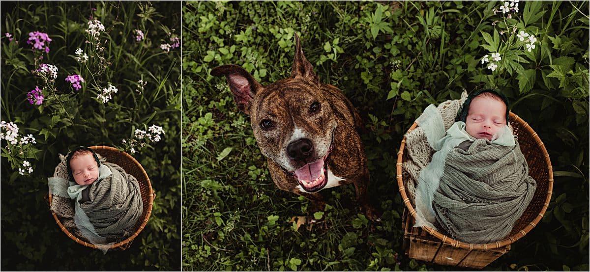 Summer Blooms Newborn Session Newborn with Dog