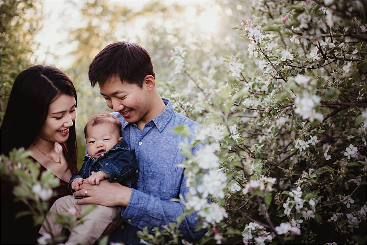 Spring Apple Orchard Session Parents Holding Son in Apple Blossoms