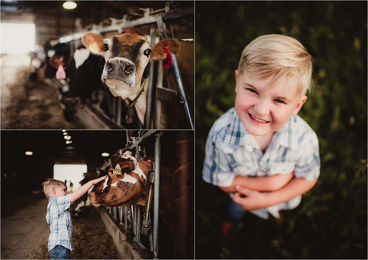 Family Farm Session Little Boy with Cows
