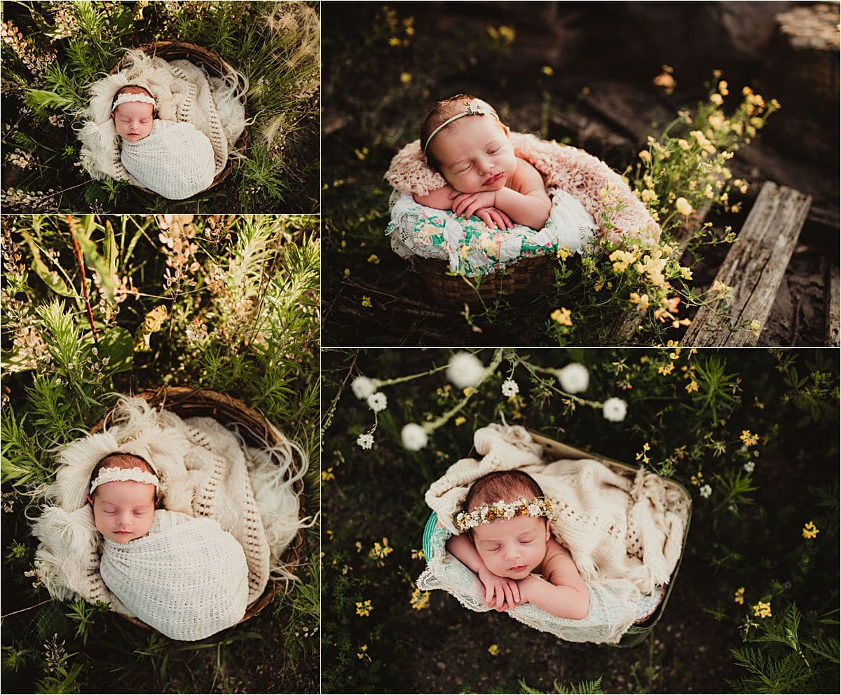 Urban Wildflower Newborn Session Collage Newborn in Field