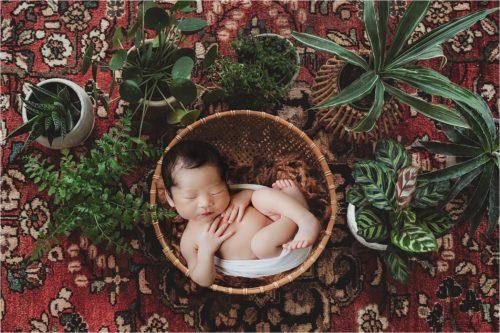 newborn digital background