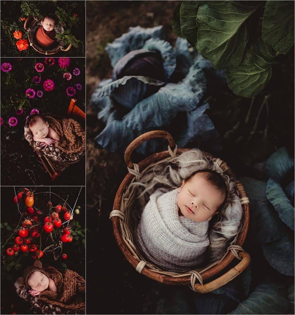 Collage Newborn in Plants